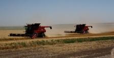 harvest-2011-1591